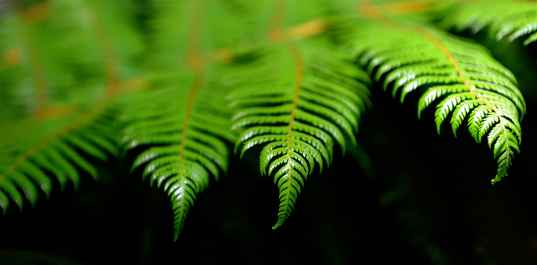 The fern.jpg