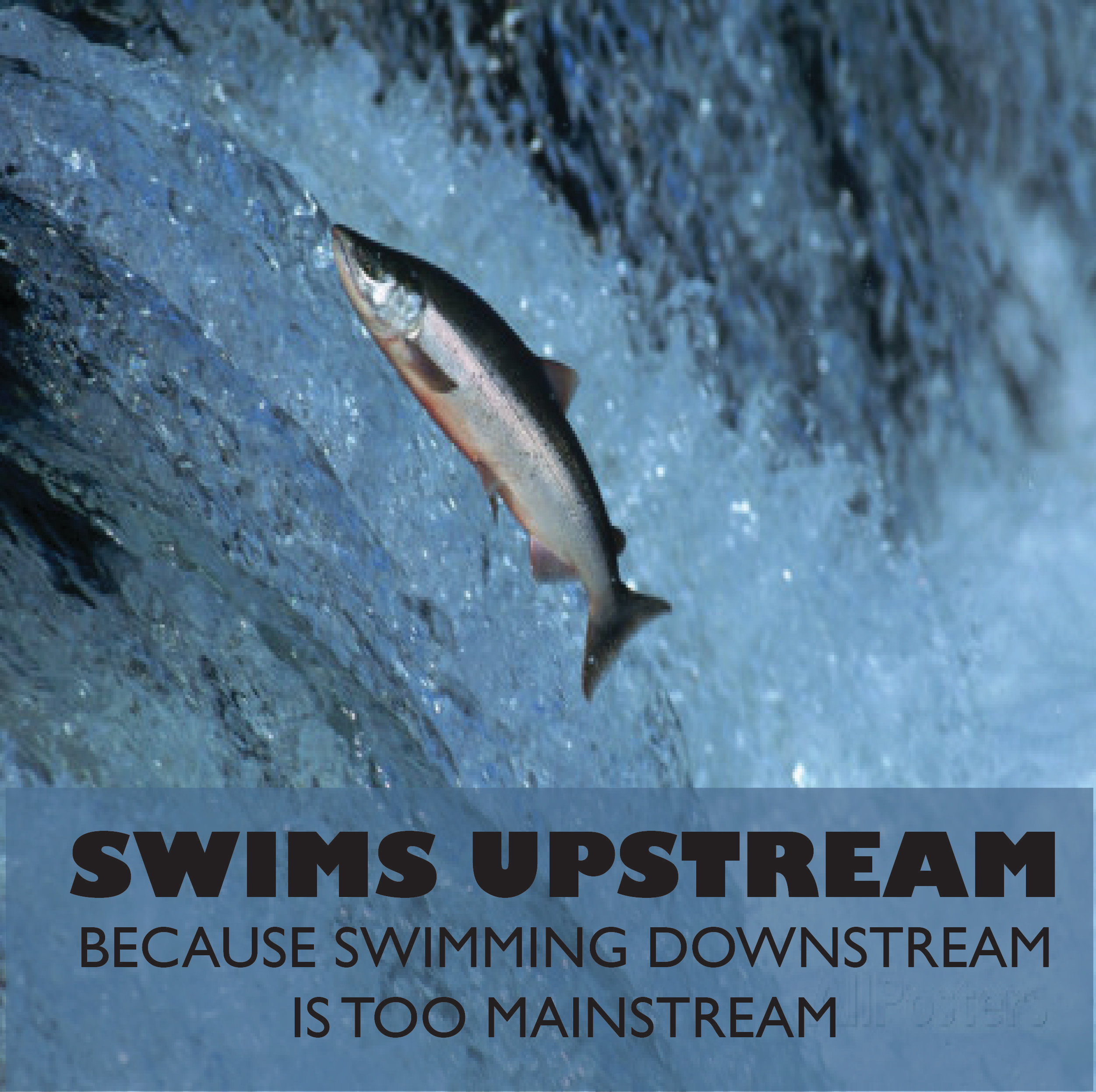 swims.upstream