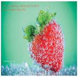 matthew.fruits