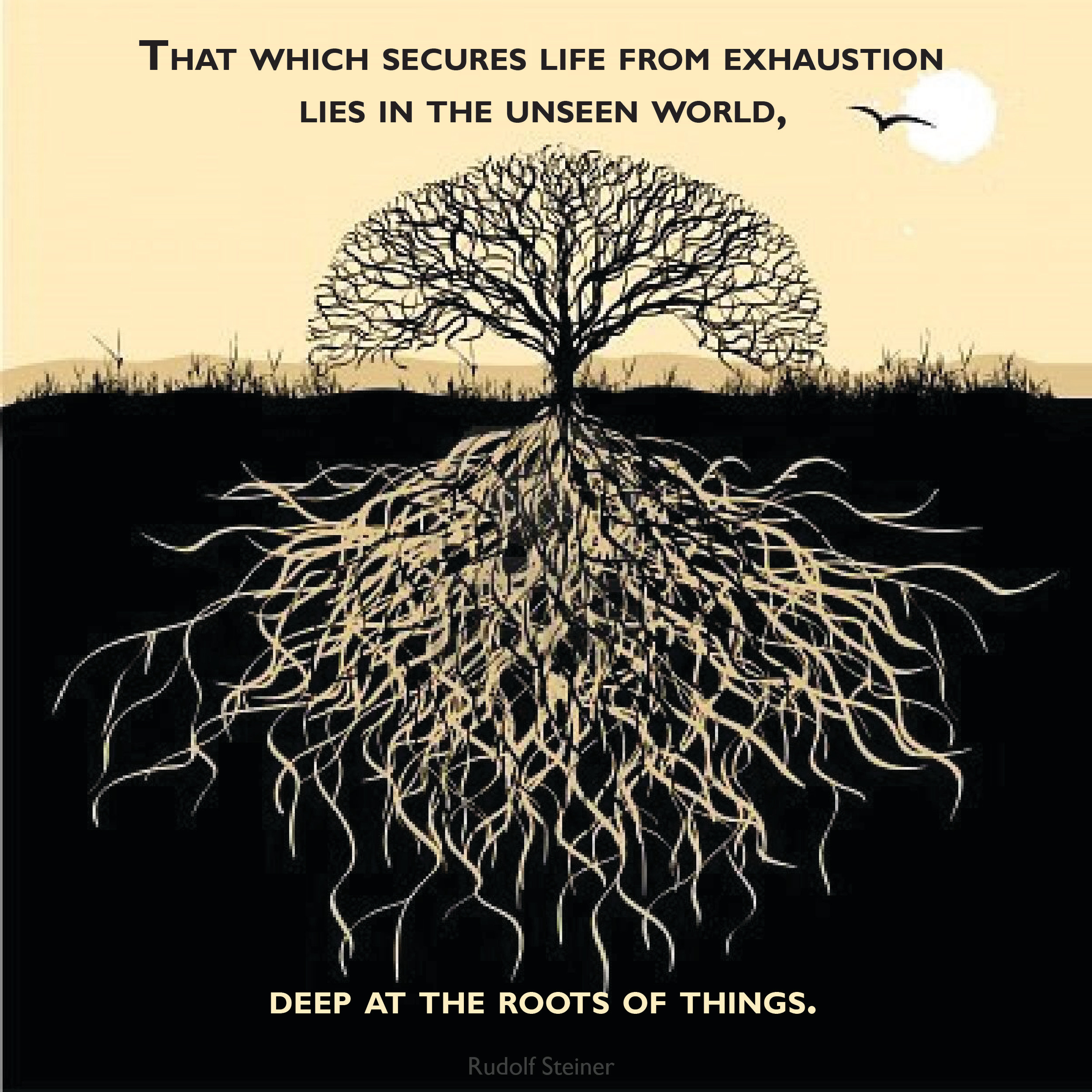 steiner.roots