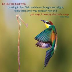 hugo.wings