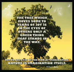 tree.imagination