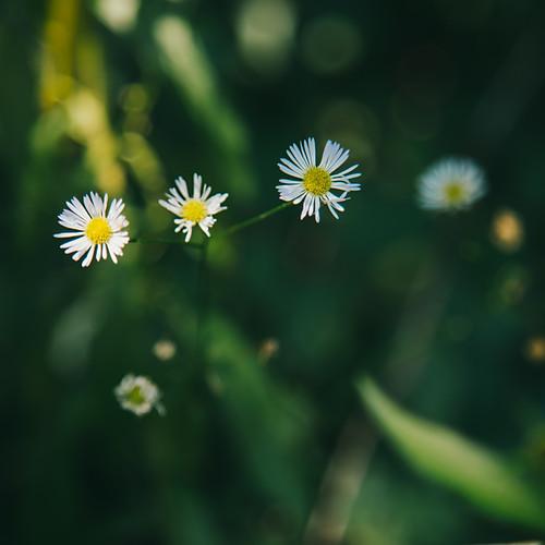 little Wildflowers, little Waterfalls
