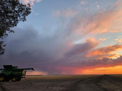Harvest at Boolarwell - Chaser bin on Su