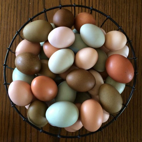 2018_AN_Flock_Basket-of-colored-eggs-tile-image-for-web-article.jpg