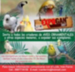 aves 1