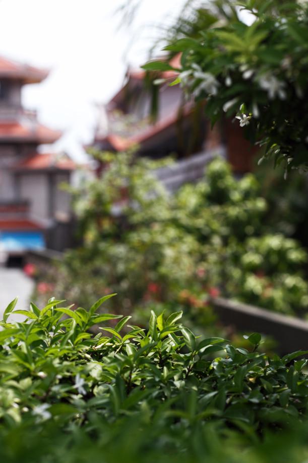 Vĩnh Nghiêm Pagoda