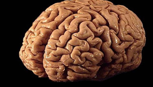 Ketone supplement could aid brain function in people with obesity