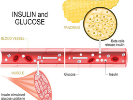 Trial to assess diet composition to treat T2DM