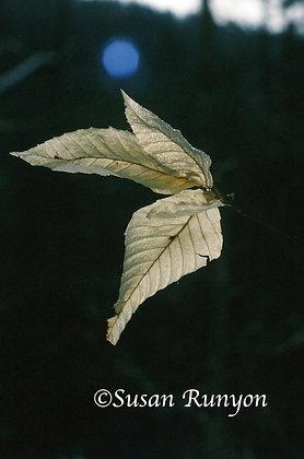 5 - Winter Leaves