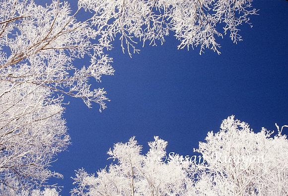 4 - Winter Sky