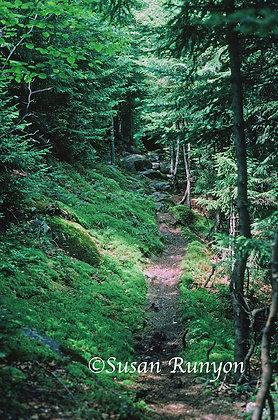 12 - Trail Up Gothics