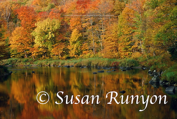 Autumn Color on the Ausable River