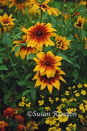 11 - Flower Garden
