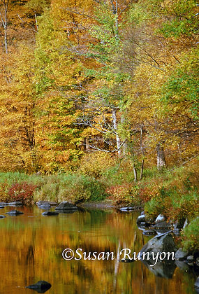 Autumn Along Ausable River