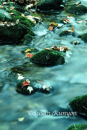 Autumn Leaves on the Ausable