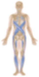 Spiral anterior.jpg