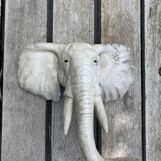 Tête d'éléphant blanc