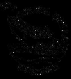 logo_balena_gialla_neutro