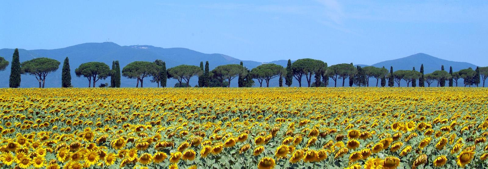 Maremma-landscape