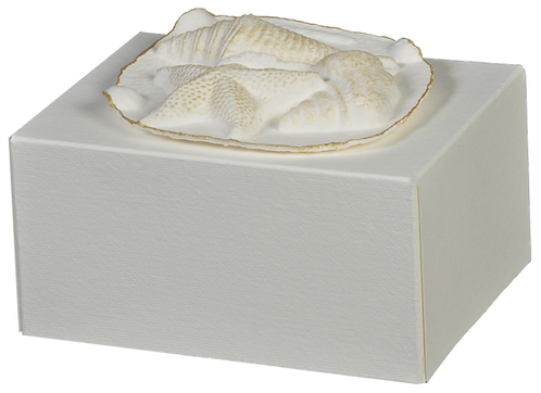 Eco-Choice | Biodegradable Cremation Urn