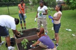 SENSES Gardening Initiative
