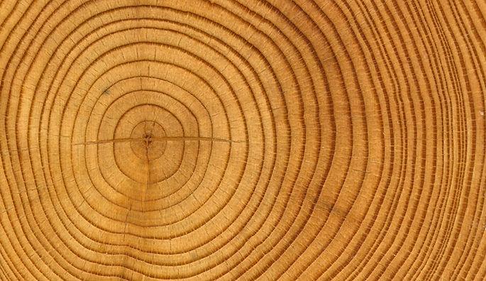 Expertos en madera
