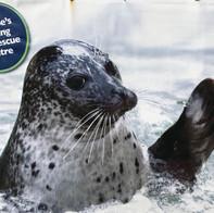 The Seal Sanctuary