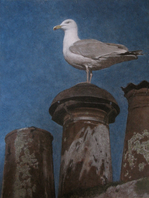 Gull on Chimney Pot