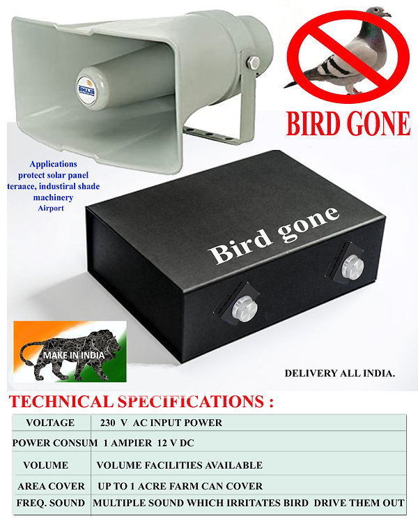 BIRD GONE without name.jpg