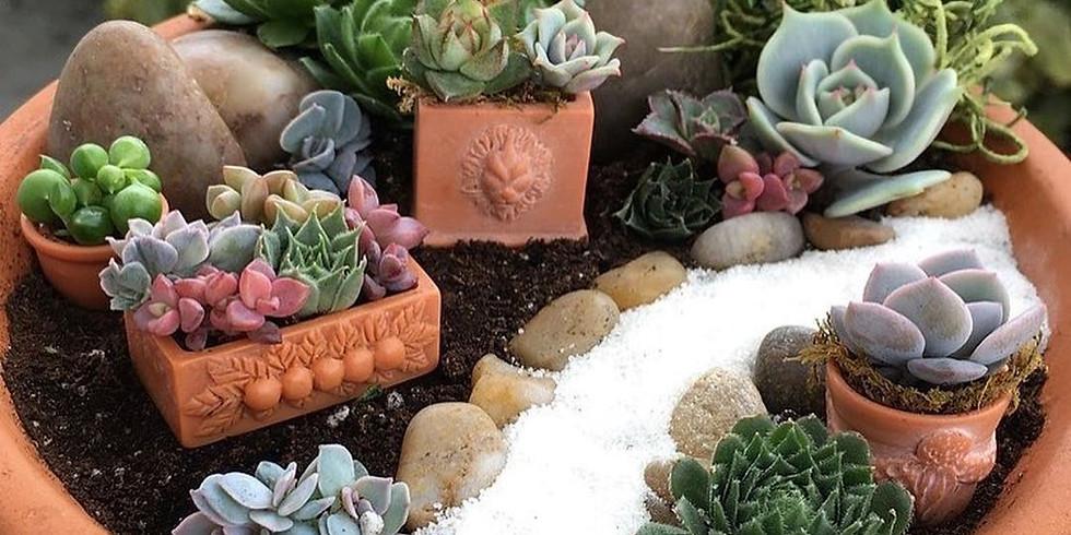 Make Your Own Succulent Garden