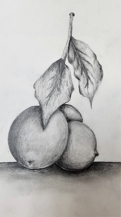 Lemon Sketching basics, Intro to sketching