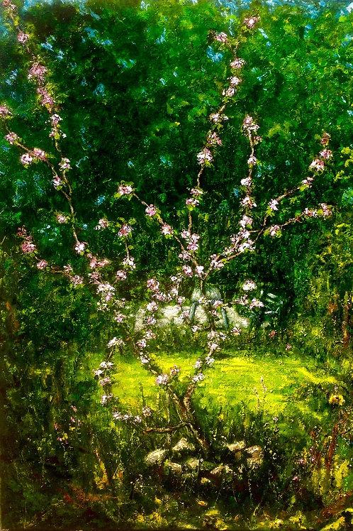 Apple Tree Chris' Garden