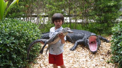Gator Park不死心尋找鱷魚之旅/美國最南端Key West海明威故居