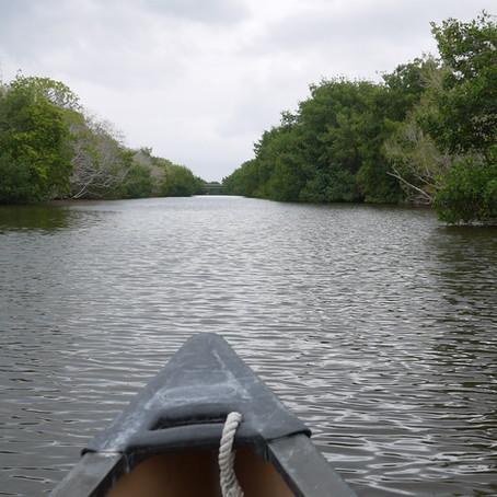 大沼澤地國家公園(Everglades National Park)之白天被蚊子吃,晚上吃鱷魚。