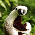 faves-lemurcenter.jpg