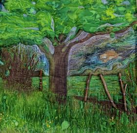 Evening Oak