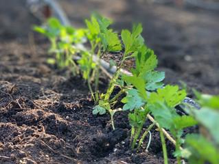 Gardening Energy Saving Tips