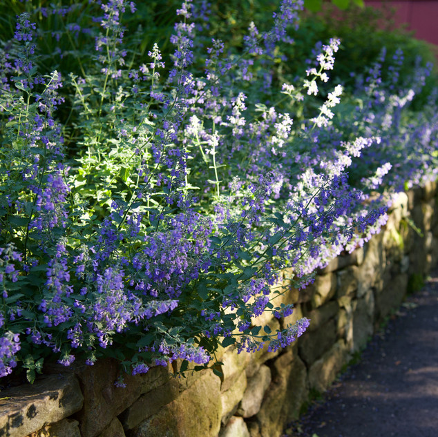 Stone Wall with Floral Overgrowth 2