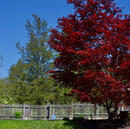 Red House Red Tree