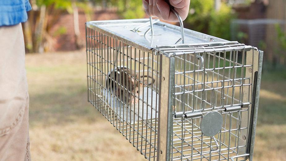 Super D Pest Control, Rodent Control