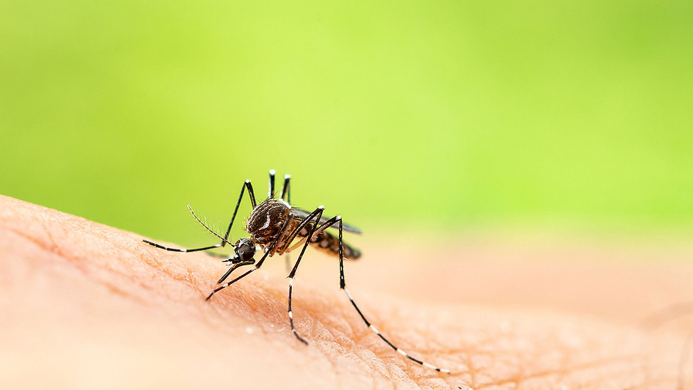 Super D Pest Control, Bradenton, FL, Florida Summer Pests