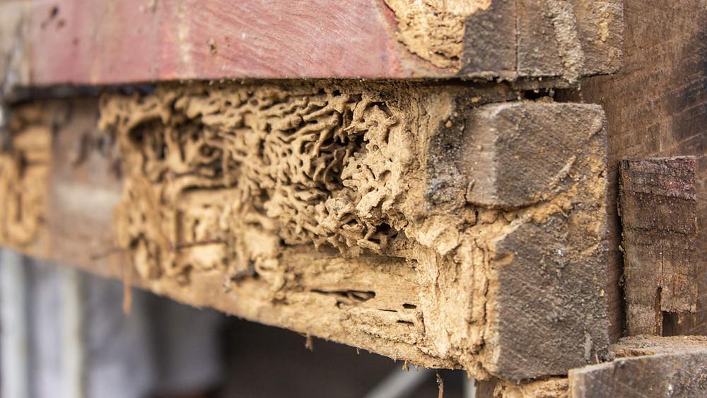 Super D Pest Control, Bradenton, FL, Florida Termites