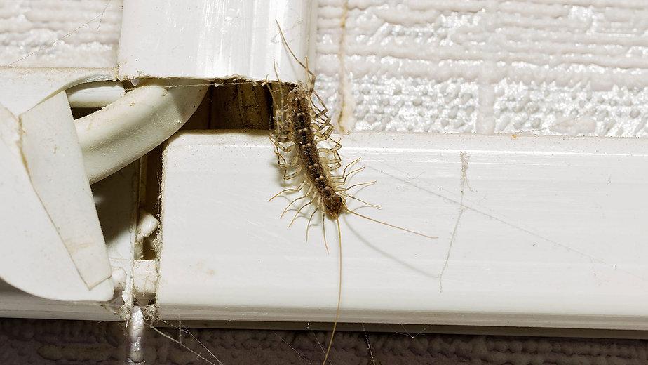 super_d_pest_control_centipede_removal.j