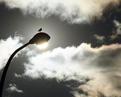 Bird sun silhouette