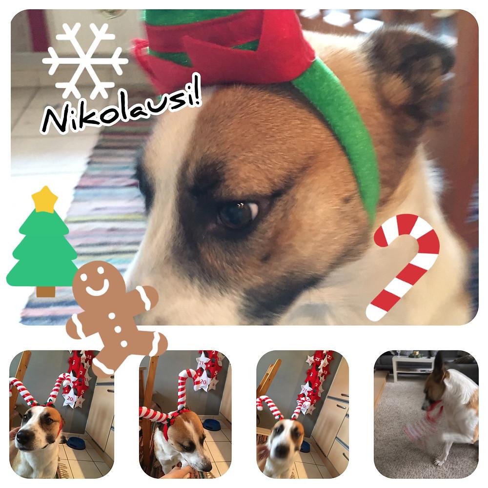 Hund Nikolaus Küche Lebkuchenmännchen Zuckerstange Weihhnachten