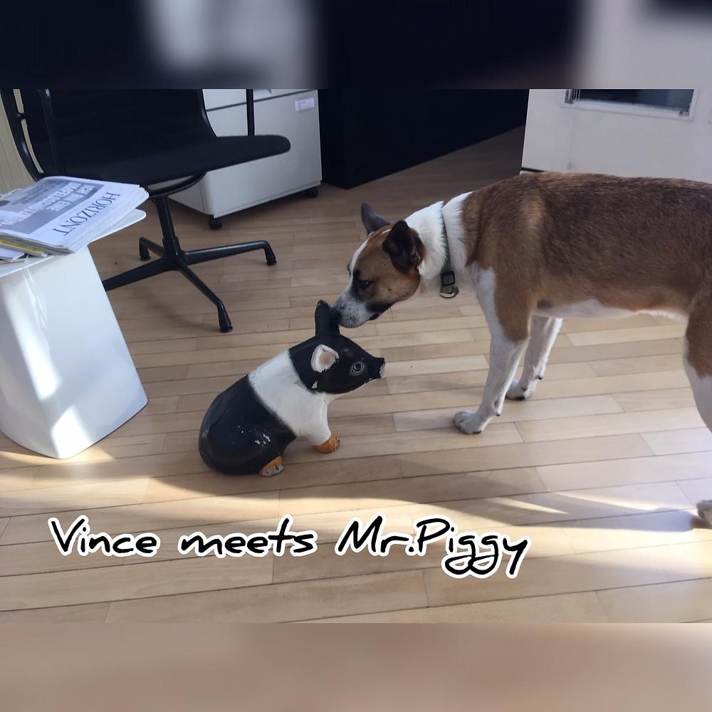 Hund Agenturhund Schwein Mr. Piggy Maskottchen Charakter große Liebe