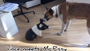 Vince meets Mr. Piggy