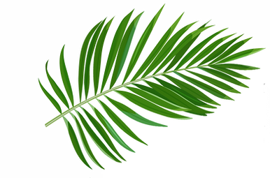 Palm Leafs.png 3.png