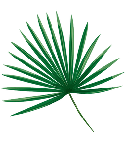Palm Leafs.png 4.png